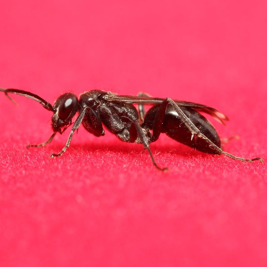 insect-2528566_1280