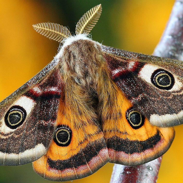 moth-1720869_1280
