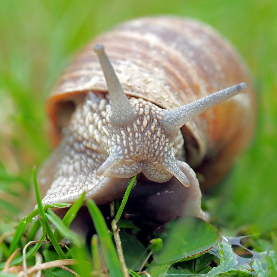 snail-1502214_1280