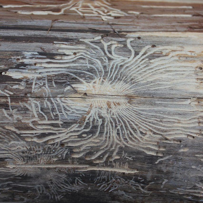 tree-bark-1103509_1280