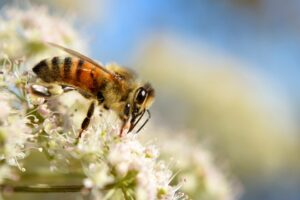 Trampas para abejas
