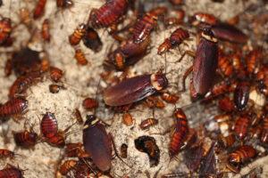 Tratamientos Contra las Cucarachas