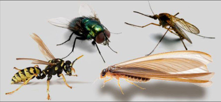 Ahuyentar o espantar los Insectos Voladores