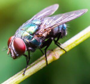 Combatir a las moscas