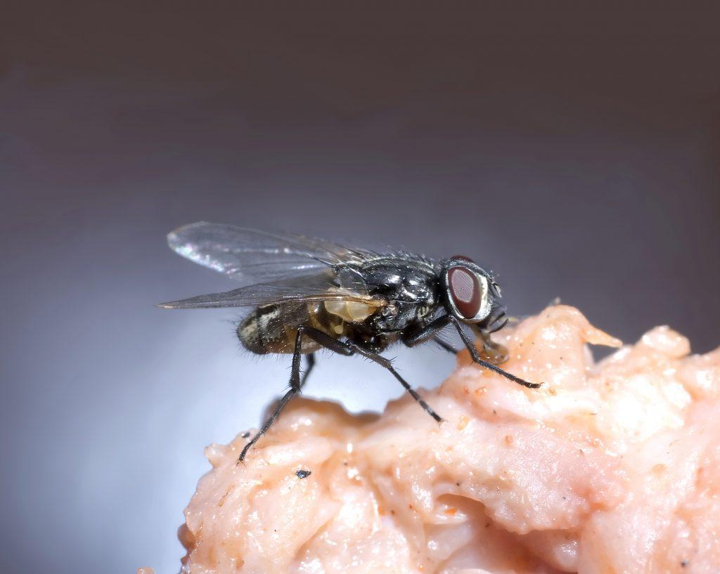 Trampas para moscas
