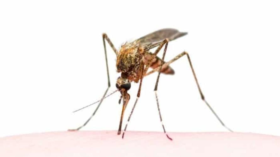 Trampas para mosquitos