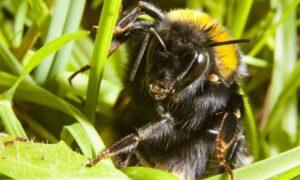 Mejores Productos para Luchar contra los abejorros