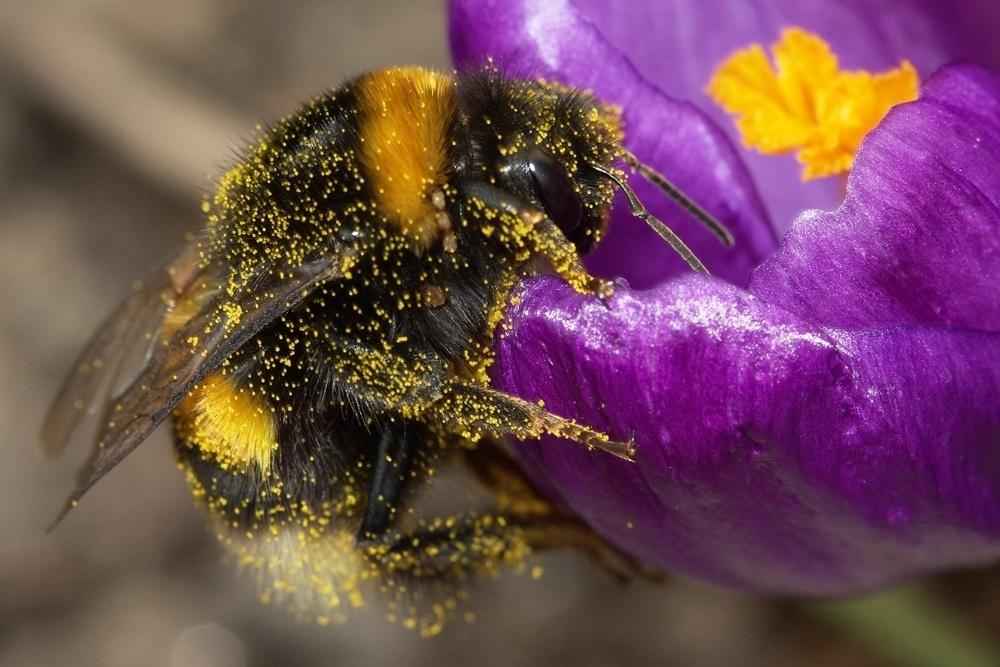 Acabar con los abejorros definitivamente