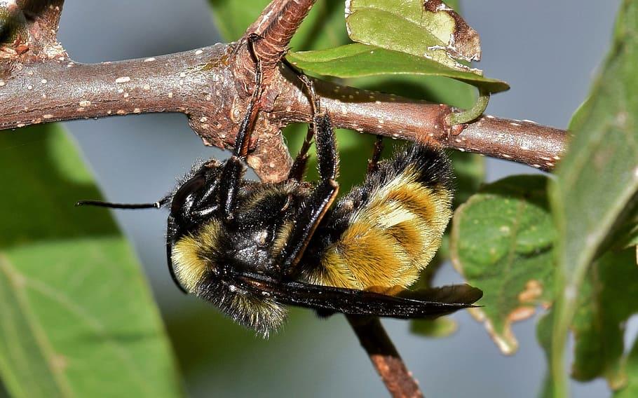 Mejor Insecticida para los abejorros