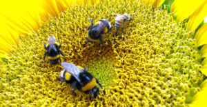 Mejores Trampas para abejorros