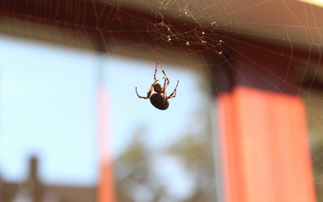 Cómo Ataca la araña