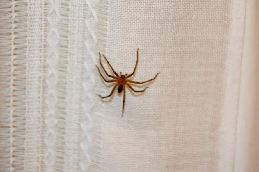 Mejores productos para Exterminar las Arañas