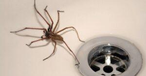 Acabar con las arañas definitivamente
