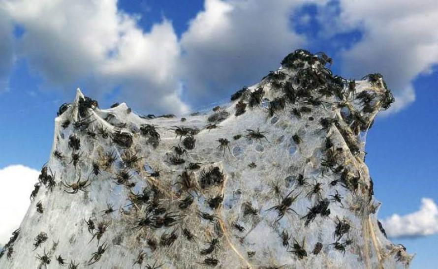 Remedios para Matar arañas