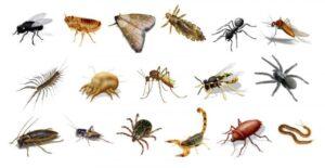 Cómo Atacan los artrópodos