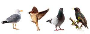 Control de plagas de Aves