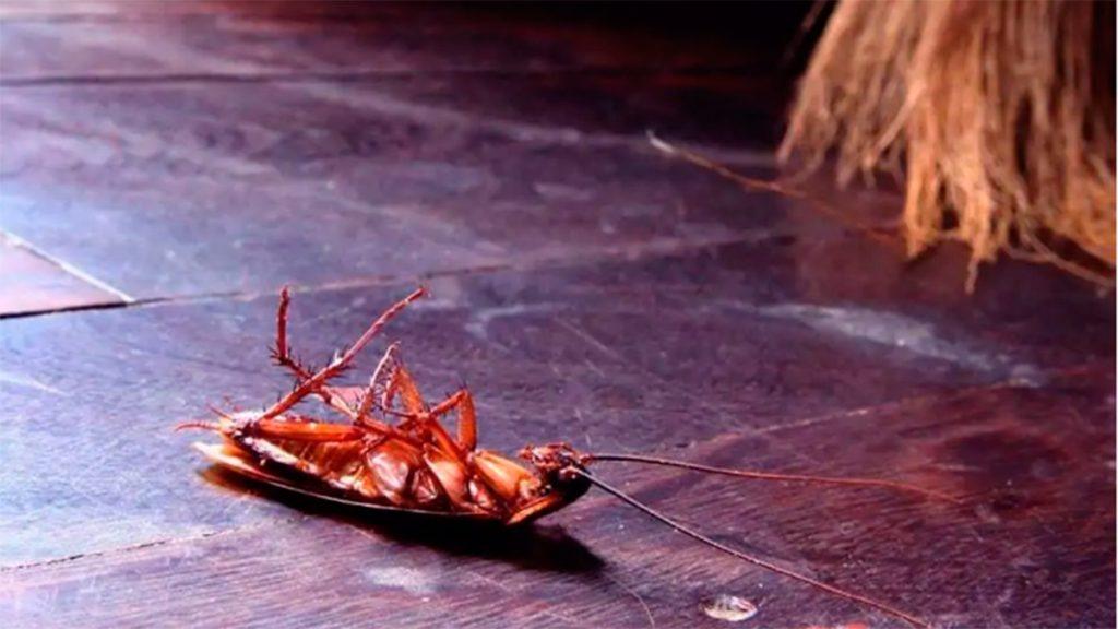 Cucarachas Sevilla