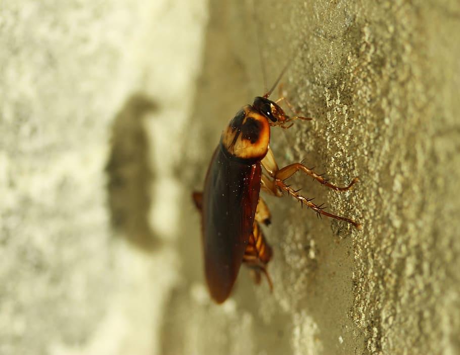 Cucarachas Córdoba
