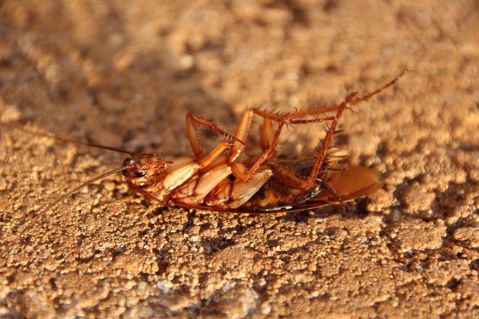 Cucarachas Huelva