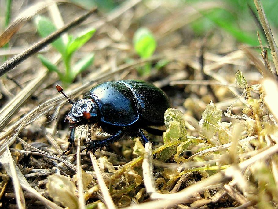Control de Plagas de Escarabajos