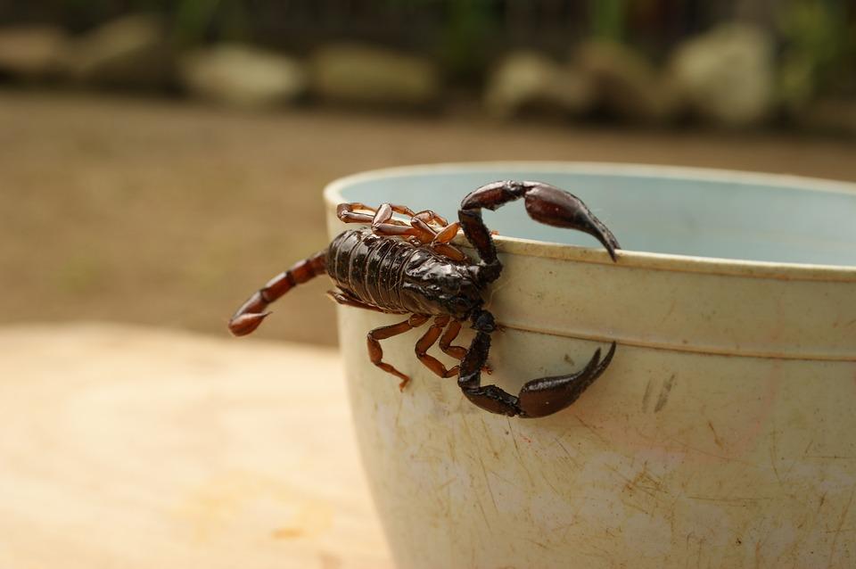 Mejores Productos para Luchar contra los escorpiones