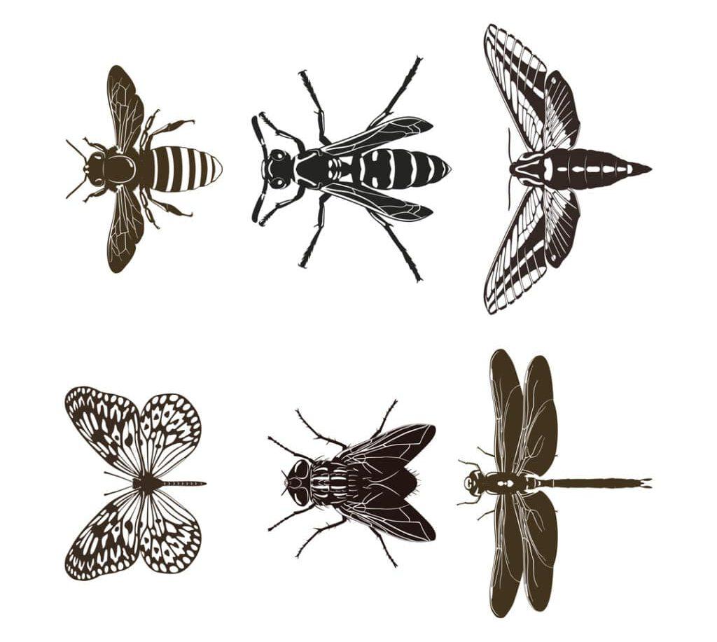 Control de Plagas de Insectos Voladores