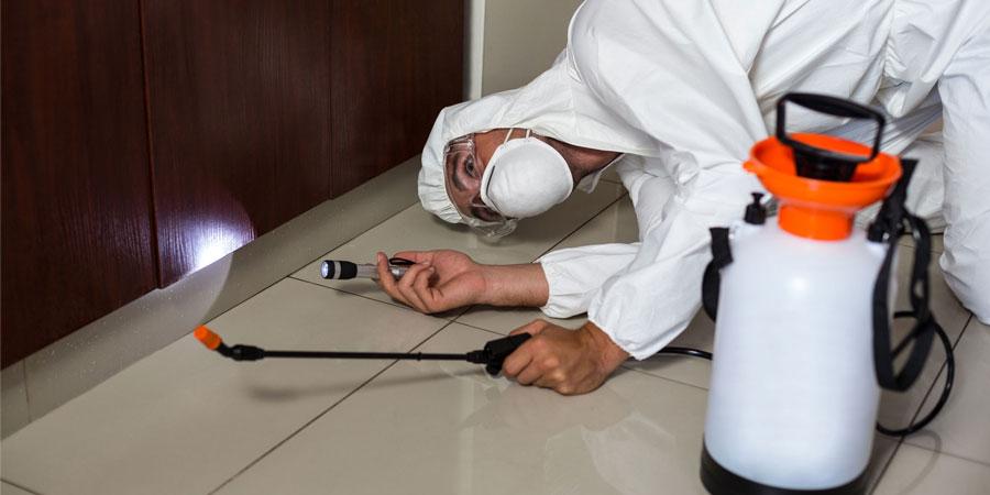 Empresas de control de plagas en bares y restaurantes