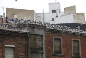 Mejores productos para las plagas en edificios