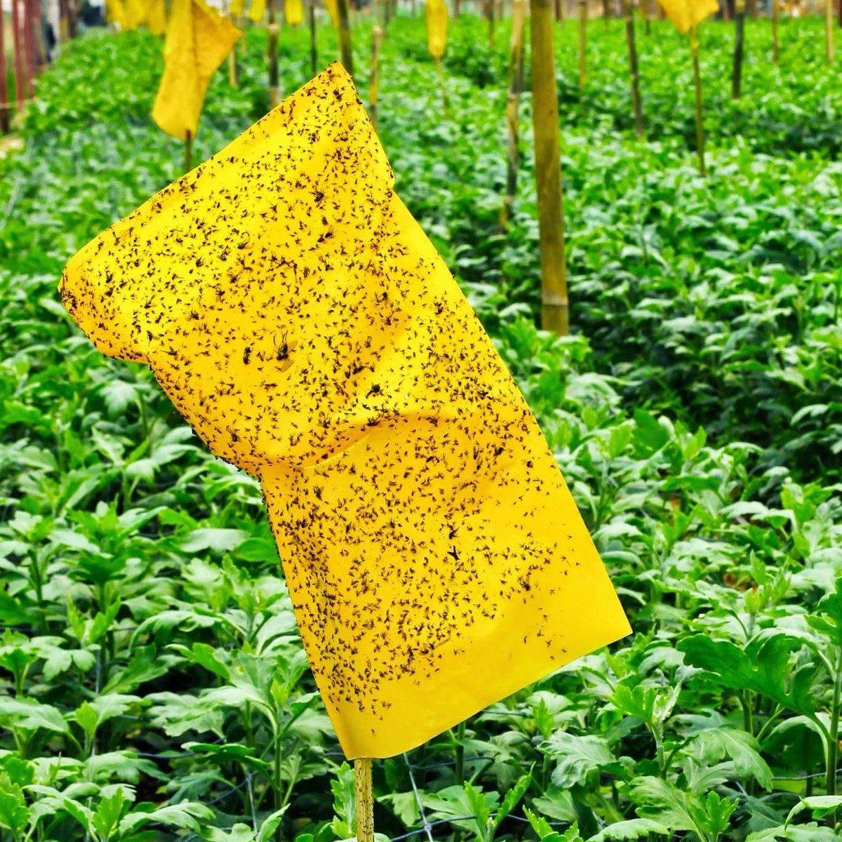 Mejores productos para Exterminar las plagas en Granjas
