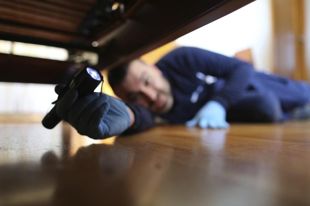 Empresas de control de plagas en hoteles