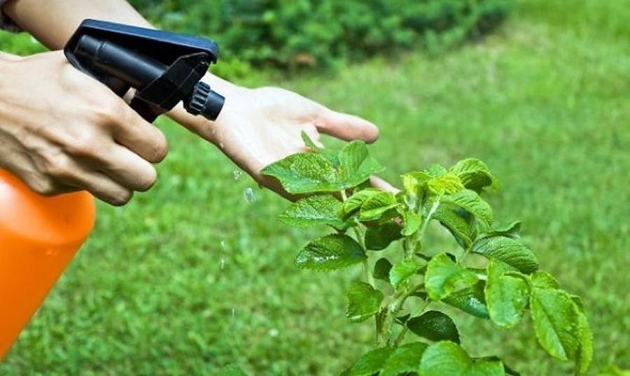 Mejores productos para Exterminar las plagas en Jardines