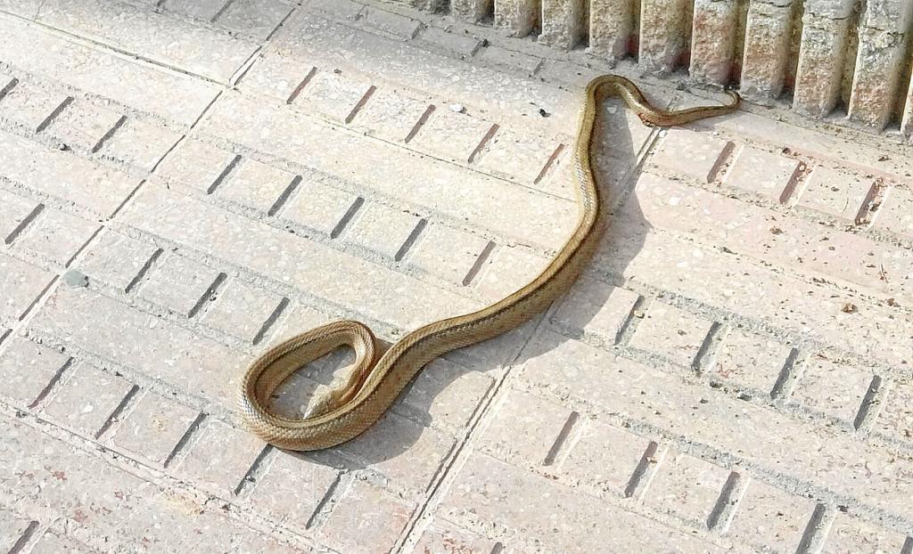¿Cómo evitar que las serpientes vuelvan?