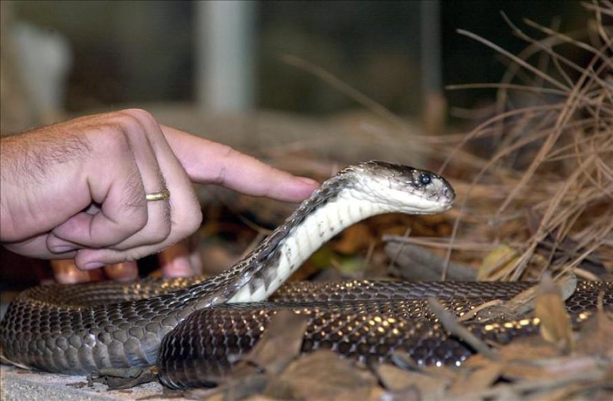 ¿Cómo matar serpientes?