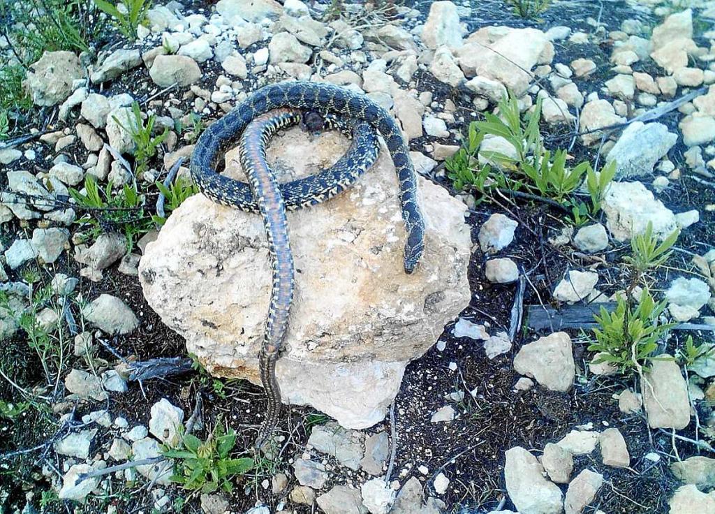 Trampas para serpientes