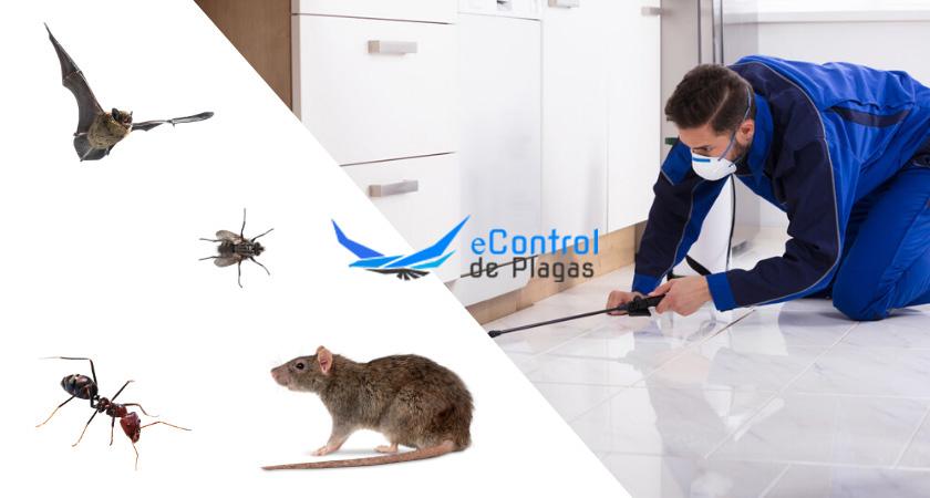 Control de Plagas en Castro Urdiales