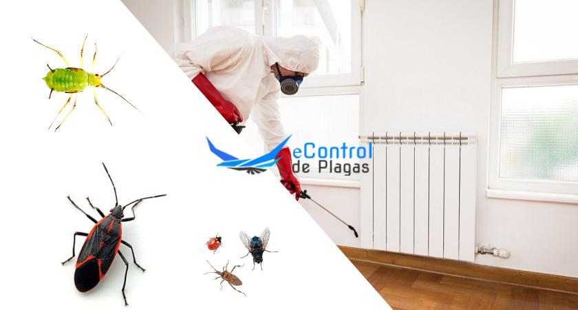 Control de Plagas en Fontcoberta