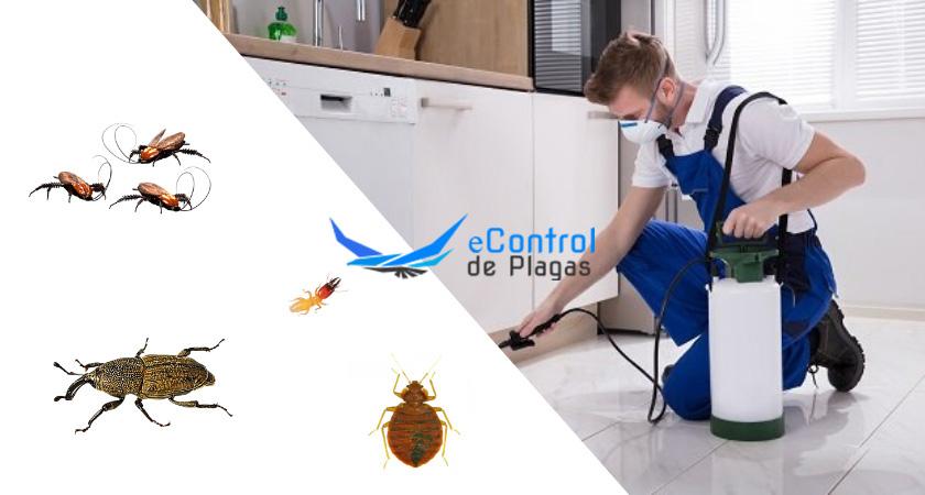 Control de Plagas en Tembleque