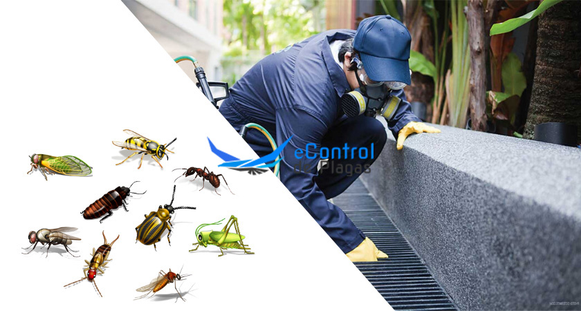 Control de Plagas en Moclinejo