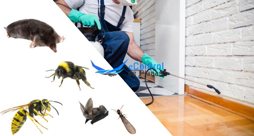 Exterminador de plagas Camargo