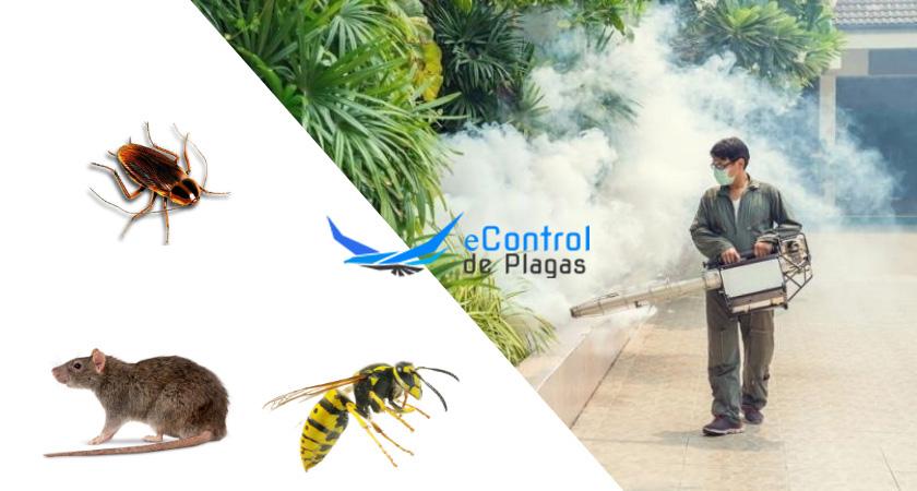 Control de Plagas en Jerte