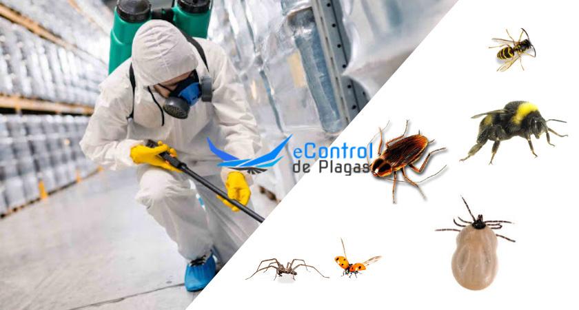 Control de Plagas en Guadamur