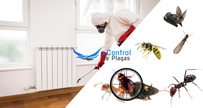 Control de Plagas en Usurbil