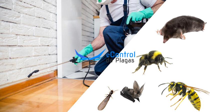 Control de Plagas en Madridejos