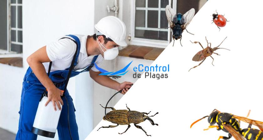 Exterminador de plagas Fontcoberta