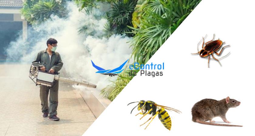 Fumigaciones en Valleseco