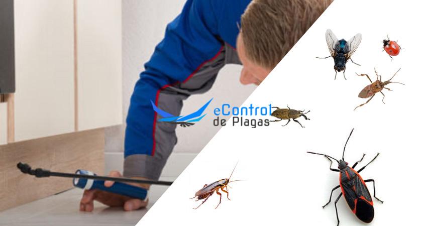 Control de Plagas en Arroyo de la Encomienda