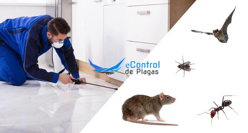 Control de Plagas en Idiazabal