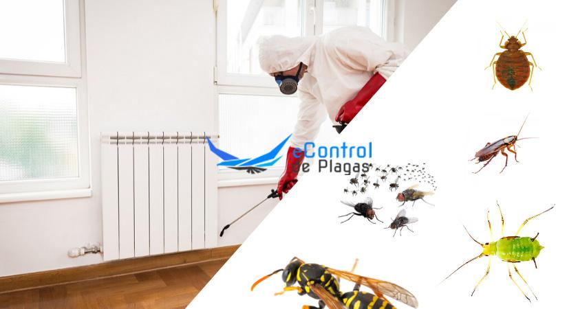 Control de Plagas en Cadrete