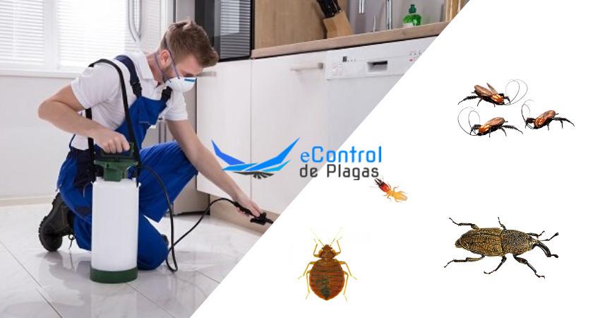 Control de Plagas en Bargas
