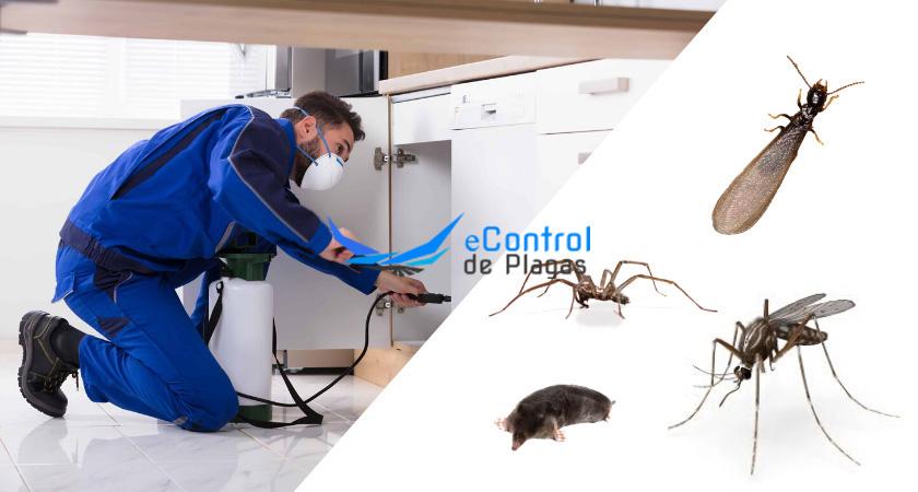 Control de Plagas en Corral de Almaguer